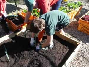 Gingin District Senior High School sustainable school garden project