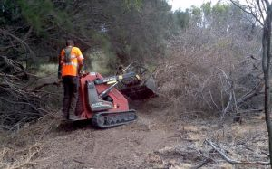 Safe removal of boxthorn using a skid steer loader