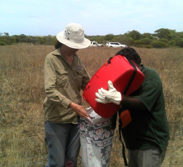 Learning seed collecting techniques with the Department of Parks and Wildlife